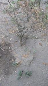Pohon-Jeruk